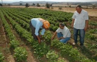 İlçe Tarım'dan Çiftçilere Uyarı