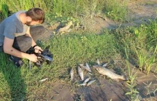Araç Çayı'nda ölü balıklar kıyıya vurdu