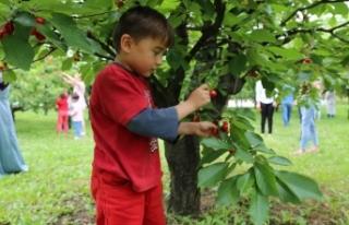 Minik öğrenciler, meyve bahçelerini gezdi