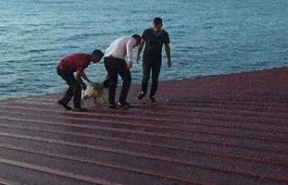 50 metrelik çatıda düşme tehlikesi geçiren köpeği...