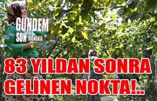83 YILDAN SONRA GELİNEN NOKTA!..