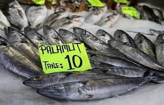 Kurban Bayramı balık fiyatlarını düşürdü