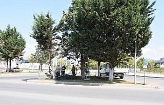 Trafiği engelleyen ağaçlar budanıyor