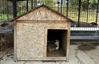Sokak köpeği ve yavruları tedavi altına alındı