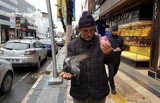 Güvercinleri avucunda besliyor