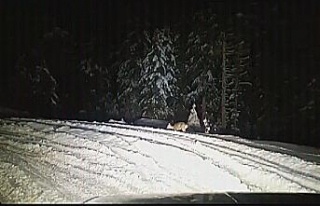 Yüksek kesimlerdeki kar yağışı yaban hayatı...