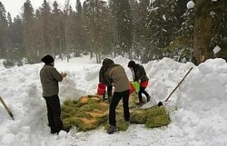 Kar kalınlığının 1 metreyi geçtiği bölgelere...