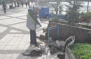Sokak kedilerine çocukları gibi bakiyor...