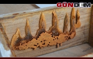 """Arılar tarafından yazılan """"Allah"""" yazısı..."""