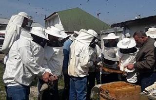 DAGEM Bölge arıcılarına ana arı ve arı sütü...