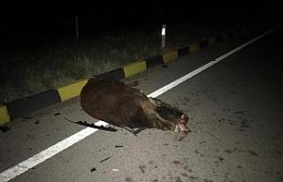 İki aracın çarptığı inek telef oldu