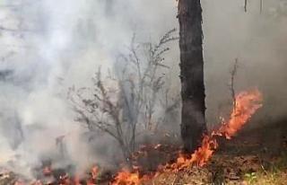 Yıldırım düşmesi sonucu ormanda yangın çıktı