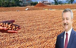 Türkmen'den fındık fiyatı açıklaması