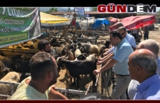 Demirtaş, hayvan pazarında