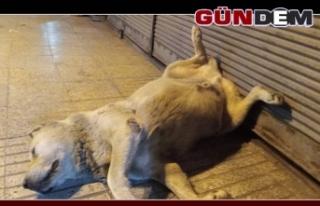 Sevimli köpeği öldü sandılar; Meğerse uyuyormuş...