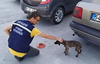 Vatandaşların şikayet ettiği 870 köpek şehir...