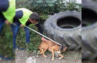 Otomobilin çarptığı köpeğin yardımına koştular