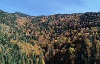 Türkiye'nin en büyük blok ormanları fotoğraf...