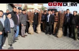 9 bin kestane fidanı dağıtıldı