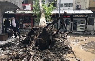 Çınar ağacı binanın üzerine yıkıldı