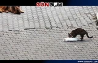 Sokak kedisinden örnek davranış