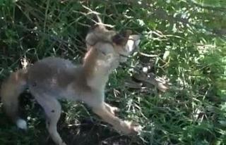 Tellere sıkışan yavru tilkiler kurtarıldı