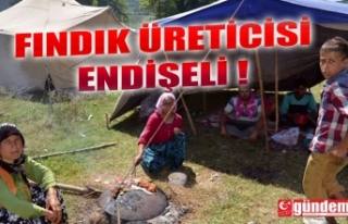 FINDIK ÜRETİCİSİ ENDİŞELİ!..