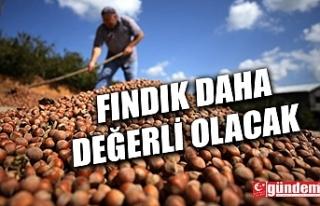 FINDIK ÜRETİCİLERİNİ SEVİNDİREN HABER...