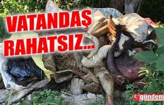 KURBANLARDAN ARTA KALANLARI GELİŞİ GÜZEL ORTALIĞA...