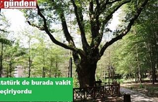 Atatürk'ün gölgesinde ayran içtiği ağaç...