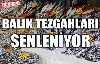 BALIK TEZGAHLARI ŞENLENMEYE BAŞLADI