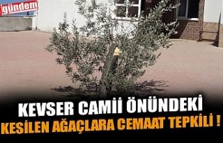 KEVSER CAMİİ ÖNÜNDEKİ KESİLEN AĞAÇLARA CEMAAT...