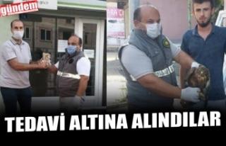 YARALI DOĞAN VE YAVRU BAYKUŞ TEDAVİ ALTINA ALINDI