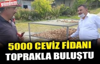 5000 CEVİZ FİDANI TOPRAKLA BULUŞTU
