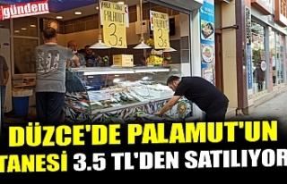 DÜZCE'DE PALAMUT'UN TANESİ 3.5 TL'DEN...