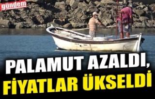 PALAMUT AZALDI, FİYATLAR YÜKSELDİ