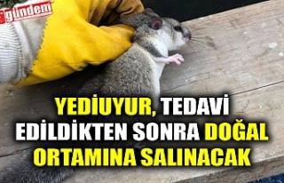 YEDİUYUR, TEDAVİ EDİLDİKTEN SONRA DOĞAL ORTAMINA...