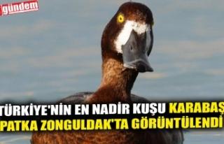TÜRKİYE'NİN EN NADİR KUŞU KARABAŞ PATKA...