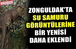 ZONGULDAK'TA SU SAMURU GÖRÜNTÜLERİNE BİR...