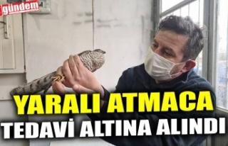 YARALI ATMACA TEDAVİ ALTINA ALINDI
