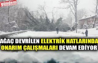 AĞAÇLARIN ÜZERLERİNE DEVRİLDİĞİ ELEKTRİK...
