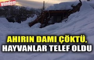 AHIRIN DAMI ÇÖKTÜ, HAYVANLAR TELEF OLDU