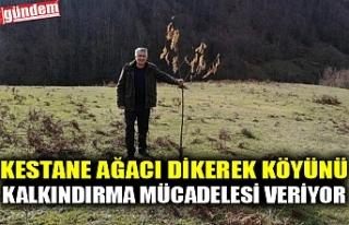 KESTANE AĞACI DİKEREK KÖYÜNÜ KALKINDIRMA MÜCADELESİ...