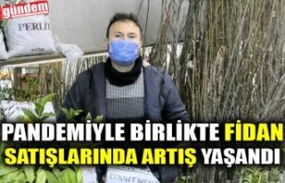 PANDEMİYLE BİRLİKTE FİDAN SATIŞLARINDA ARTIŞ...