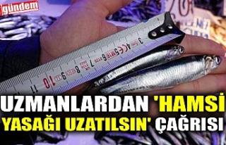 UZMANLARDAN 'HAMSİ YASAĞI UZATILSIN' ÇAĞRISI