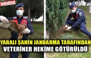 YARALI ŞAHİN JANDARMA TARAFINDAN VETERİNER HEKİME...