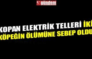KOPAN ELEKTRİK TELLERİ İKİ KÖPEĞİN ÖLÜMÜNE...