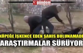 KÖPEĞE İŞKENCE EDEN ŞAHIS BULUNAMADI, ARAŞTIRMALAR...