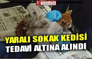 YARALI SOKAK KEDİSİ TEDAVİ ALTINA ALINDI