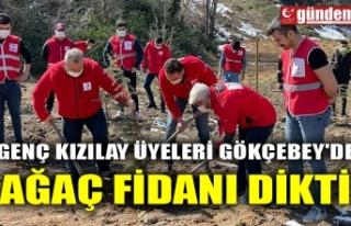 GENÇ KIZILAY ÜYELERİ GÖKÇEBEY'DE AĞAÇ...